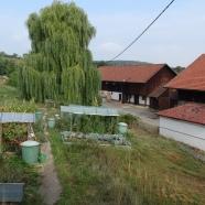 Stuttgart - Garten von der Haus-WG und ein Stück vom ehemaligen Ziegenhof